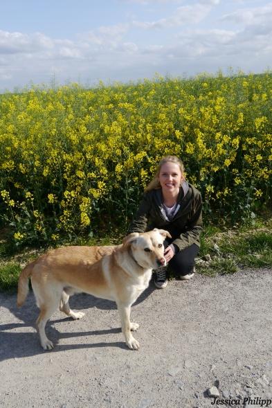 balu und ich, gelb