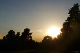 Wald Sonnenuntergang